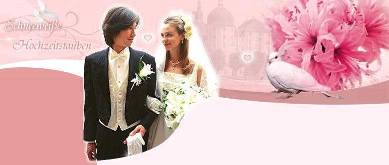 Hochzeitstauben Dresden Unsere Preise